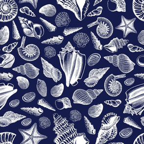 Sea Shells-Beachcomber
