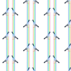 rainbow pigeons