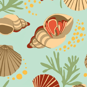 Sea Shells Hermit Crab