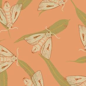 Bogong Moth on pink (large scale)
