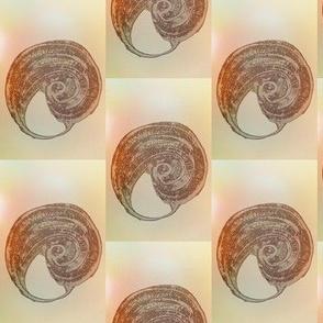 Ancient Seashells on a Neutral Checkerboard