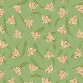 Bogong Moth on green (medium scale)