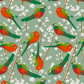 king parrots in blossom on green (small scale)