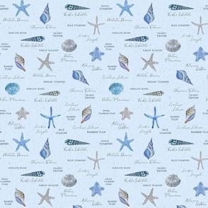 Naturalist Seashells