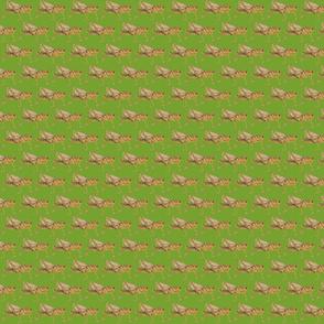 hopper green