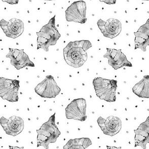 Silver grey seashells - watercolor summer ocean vibes a241-8
