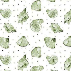 Khaki seashells - watercolor summer ocean vibes a241-12