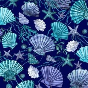 seashell and starfish with seaweed   blue