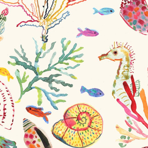 JUMBO Every seashell has a story