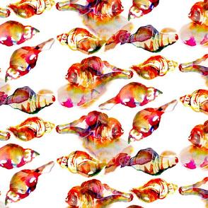 Wilmington Seashells
