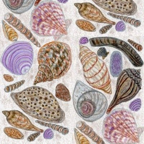 Sea_shells_hand-drawn_colored_pencil