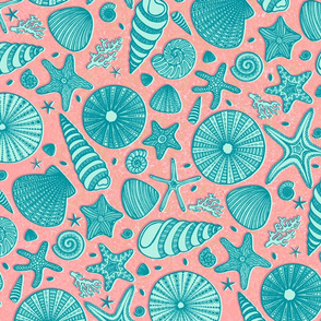 Summer Shells//Large Scale