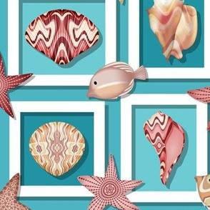 Shadow Box Seashells