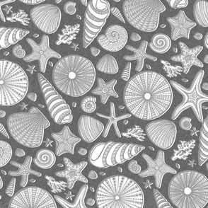 Summer Shells//Gray//Large Scale