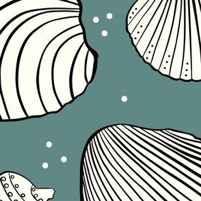 pass-a-grille beach shells green