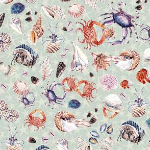 Seashells lifestyle _turquoise palette