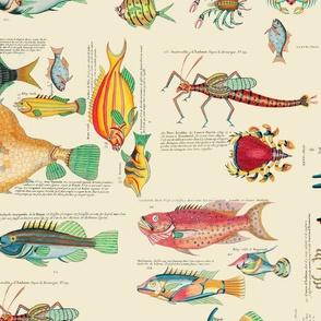 Multicolor Fish And Sea Life Illustration