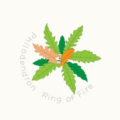 Embroidery - Indoor Jungle Philodendron Ring of Fire