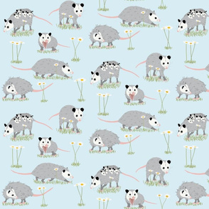 Opossums and Daisies Small Scale
