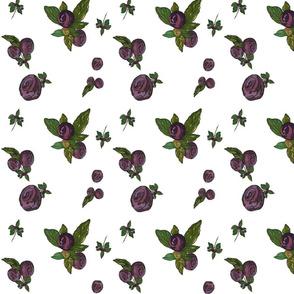Huckleberry_scatter