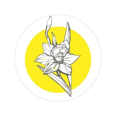 Sun Narcissus full bloom