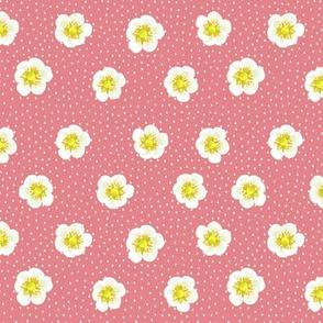 Strawberry flowers - pink