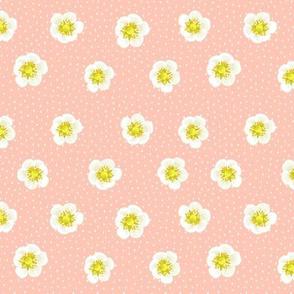 Strawberry flowers - blush