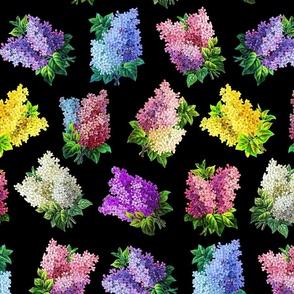Lilacs on black ground