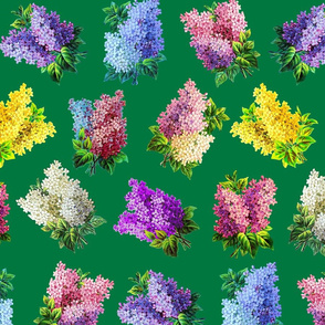 Lilacs on green ground