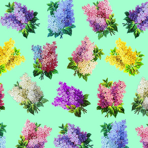Lilacs on mint ground