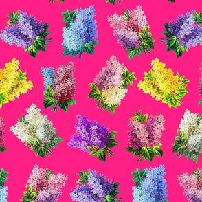 Lilacs on raspeberry ground