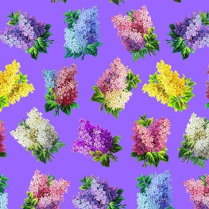 Lilacs on violet ground