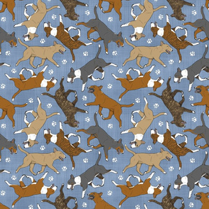 Trotting Miniature Bull Terriers colored and paw prints - faux denim