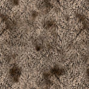 Merle brown poodle curl fur texture