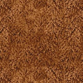 Appricot red poodle curl fur texture
