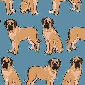 English Mastiff on Blue