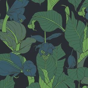 dark  jungle medenilla