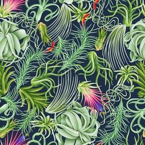 Tillandsia forest beautiful air plants pattern