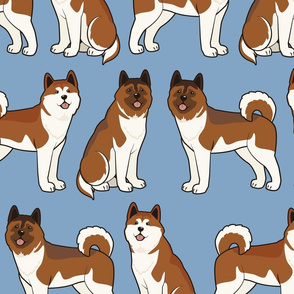 Akita Dog on Blue