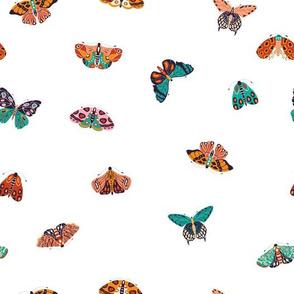 Spring Butterflies and Moths 3