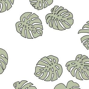 Monstera leaves summer garden boho design plant texture tropical hawaii nursery sage green olive on white