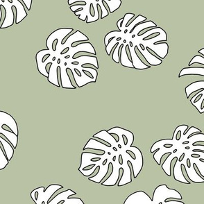 Monstera leaves summer garden boho design plant texture tropical hawaii nursery mist green white