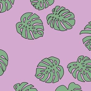 Monstera leaves summer garden boho design plant texture tropical hawaii nursery cool pink green mint