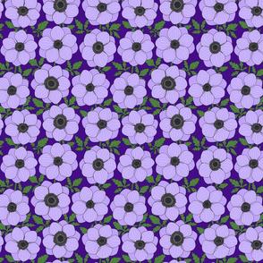 light violet anemone line drawing floral on purple