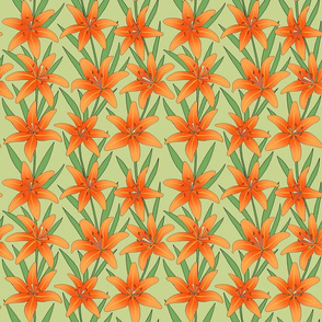 orange daylilies line drawing floral on light moss green