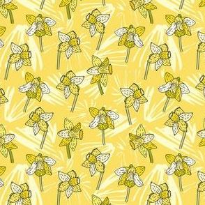 Daffodil Peach