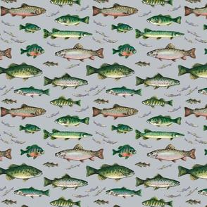24016 Fish_gray_repeat tile_300dpi