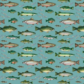 Go Fish on light teal
