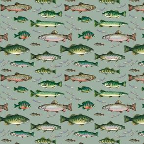 Go Fish on sage ground