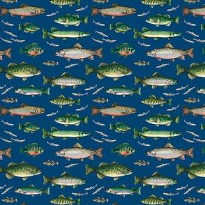 Go Fish on dark blue